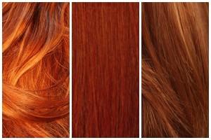 FG-Ginger